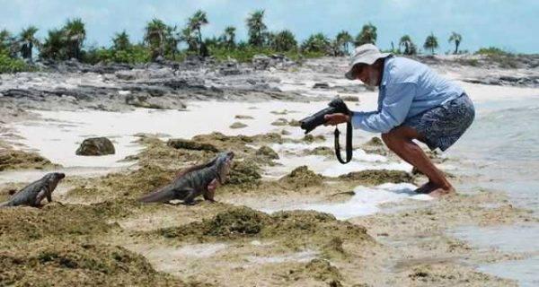 Bahamas iguana