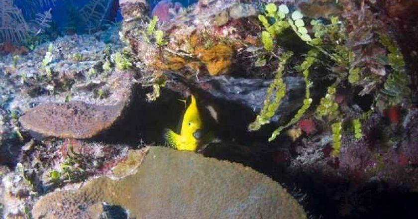 Grand Bahama reef