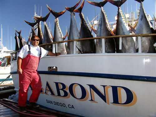 Anglers Hammer Bluefin And Yellowfin Coastal Angler