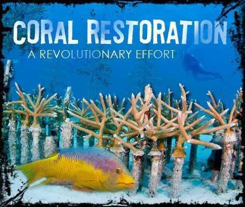 coral_restoration