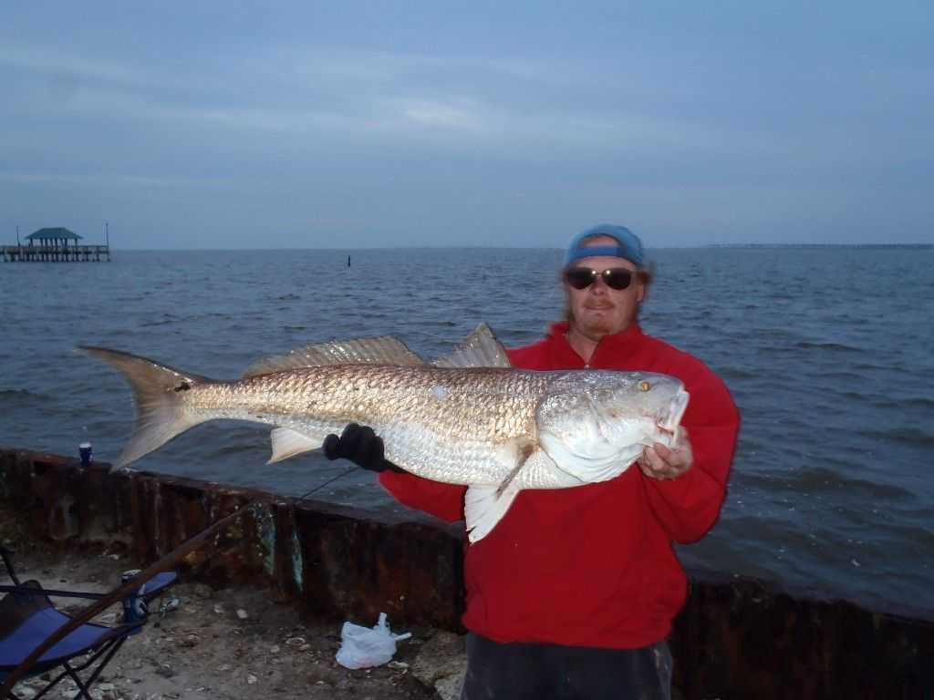 Gulf coast fishing reports for Fishing gulf shores