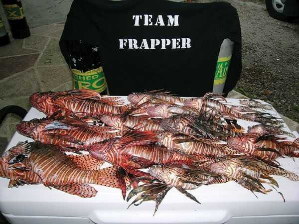 Team-Frapper-and-lionfish