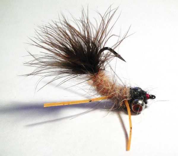 Fly of the month garners carp dancer coastal angler for Carp fly fishing