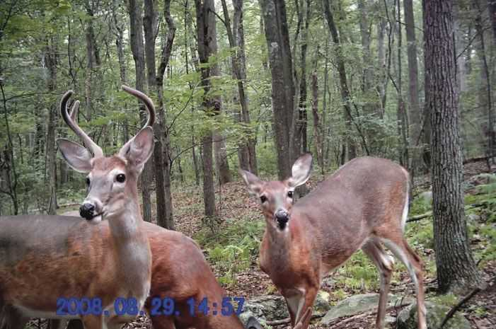 """Trail cameras can be very useful in October, when the woods fill with hunters and mature bucks seek refuge. Limit the pressure you put on deer during """"the October lull"""" and watch as bucks from other properties begin showing up in front of your cameras."""