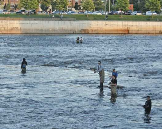 Grand river fishing report coastal angler the angler for Grand river fishing
