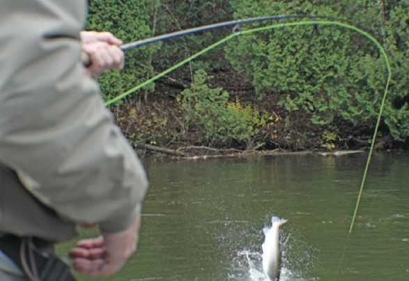 Upper pere marquette fishing report july 2014 coastal for Pere marquette river fishing report