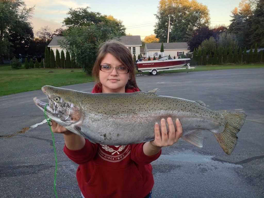 First steelhead trophy fish coastal angler the for Steelhead fishing report erie pa