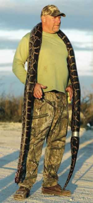 python-hunt-florida