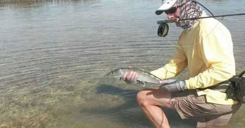 Bahamas inshore archives coastal angler the angler for Long island fishing report