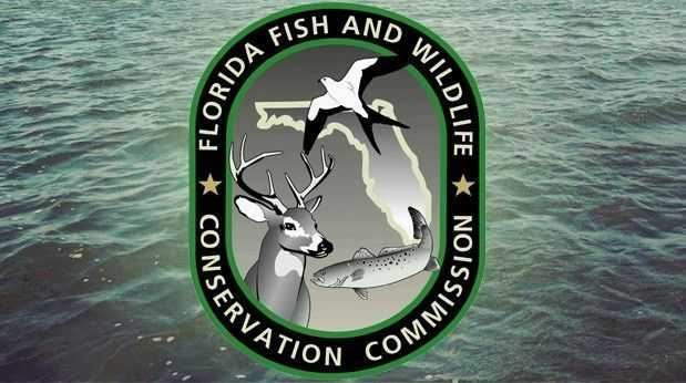 Free women s saltwater fishing clinic st george island for Florida fish and wildlife commission