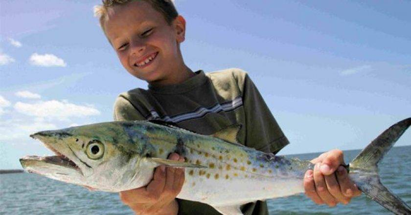 Cedar key fishing reports archives coastal angler the for Big bend fishing report