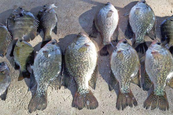 Lake talquin fishing report april 2014 coastal angler for Lake talquin fishing report