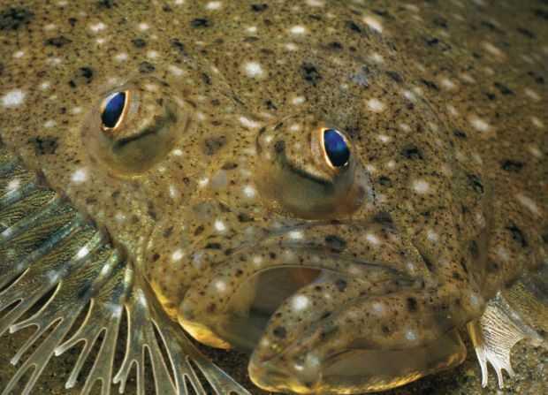 Spring Flounder Fishing Texas Coast likewise 5 Ways Enjoy Crawfish together with Caddo lake as well Watch additionally Alligator Gar. on fish in bayou