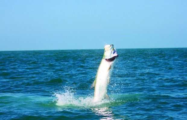 Spirit of Tarpon
