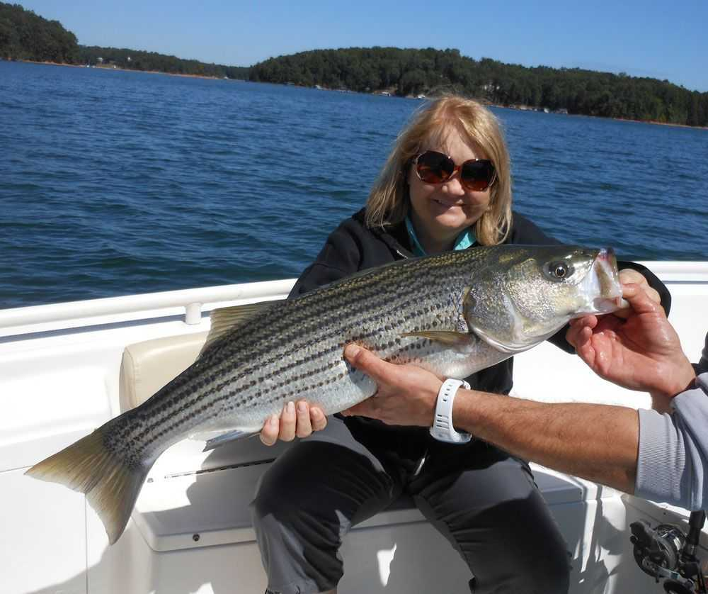 Fall striped bass on lake lanier coastal angler the for Lake lanier striper fishing
