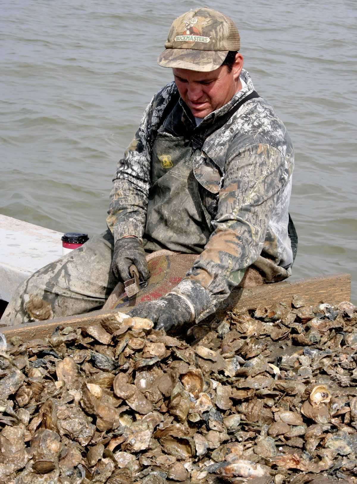 Oyster Harvest Changes Effective In Florida's Apalachicola