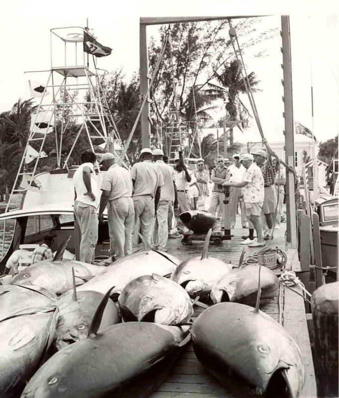 Bluefin-Tuna---6---dock