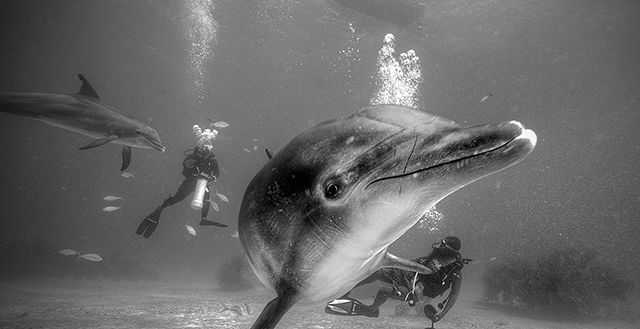 Diving with the dolphins is one of UNEXSO's signature dives. PHOTO CREDIT: UNEXSO.