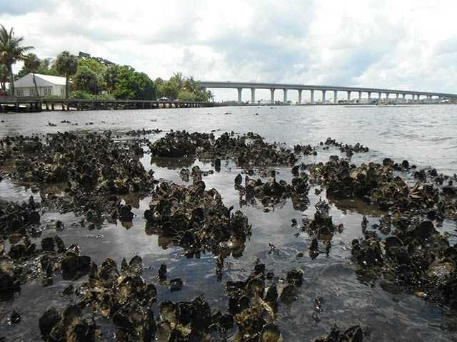 Natural Oyster Reef Oyster Restoration: Fr...