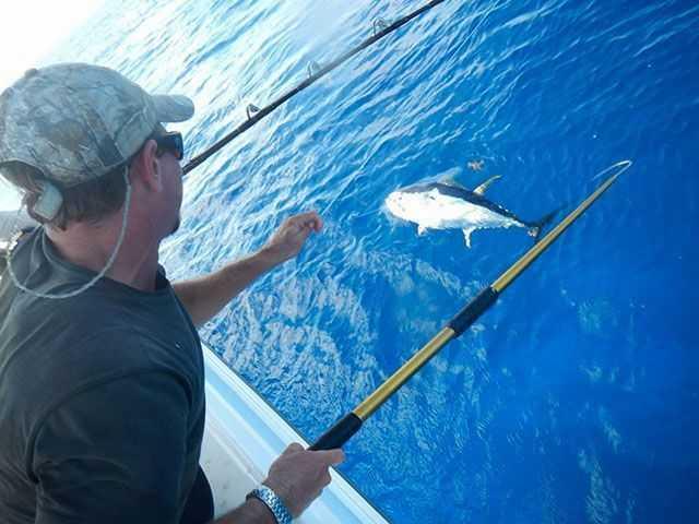 Yellowfin tuna coastal angler the angler magazine for Freshwater fishing long island