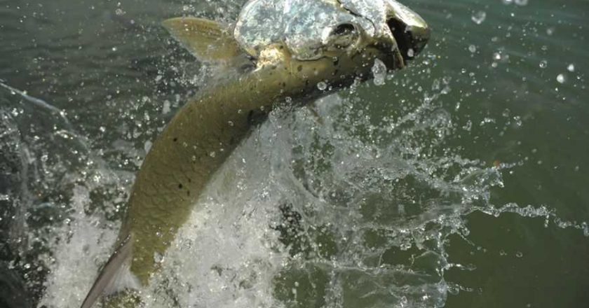 Okeechobee fort myers fishing reports archives page 2 of for Franks great outdoors fishing report