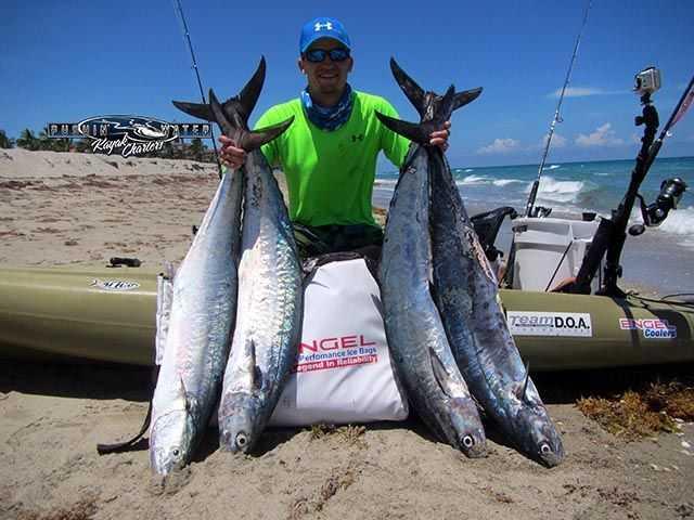 Offs Fishing Is Resulting In Kingfish Mahi Sailfish And Tuna