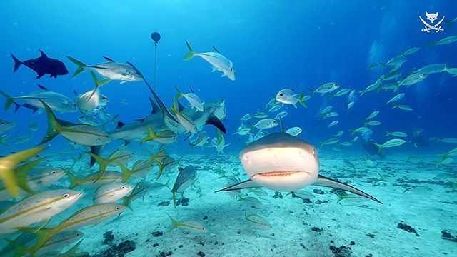 West Palm Beach Scuba Diving Conditions