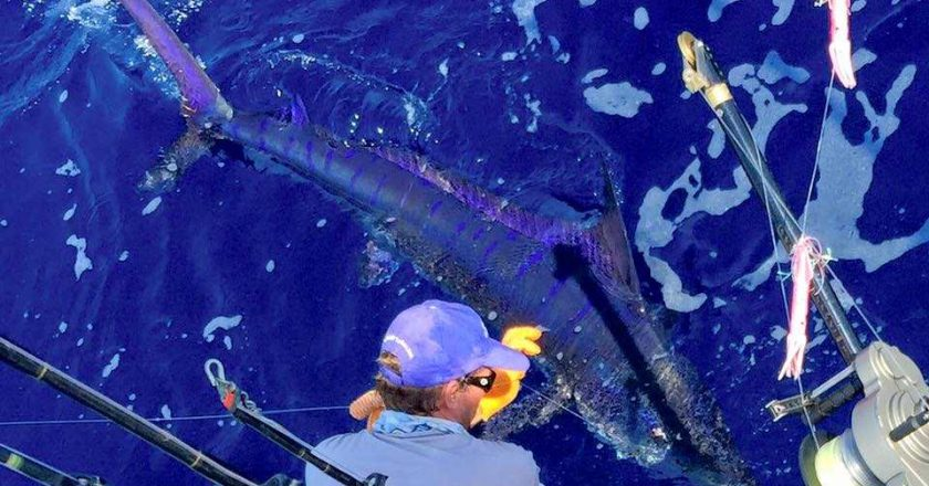 billfish season in costa rica