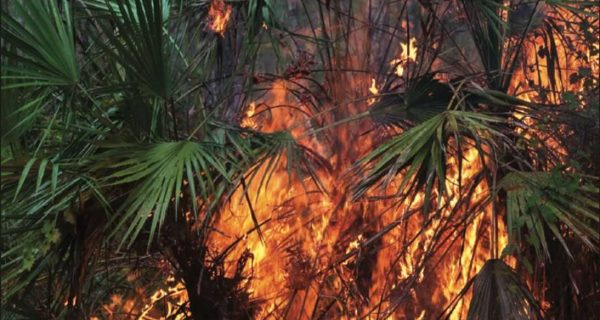 Florida Forest Fire