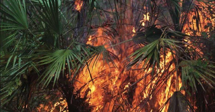 Florida Forest Fire