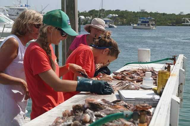 Held in May to help combat the invasive lionfish in our waters.
