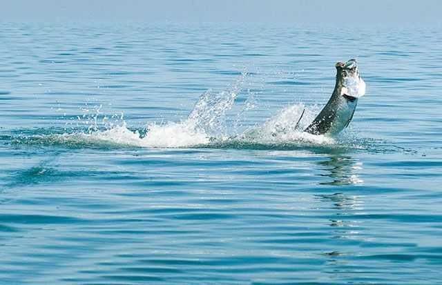 bimini inshore fishing report and forecast february 2016 coastal