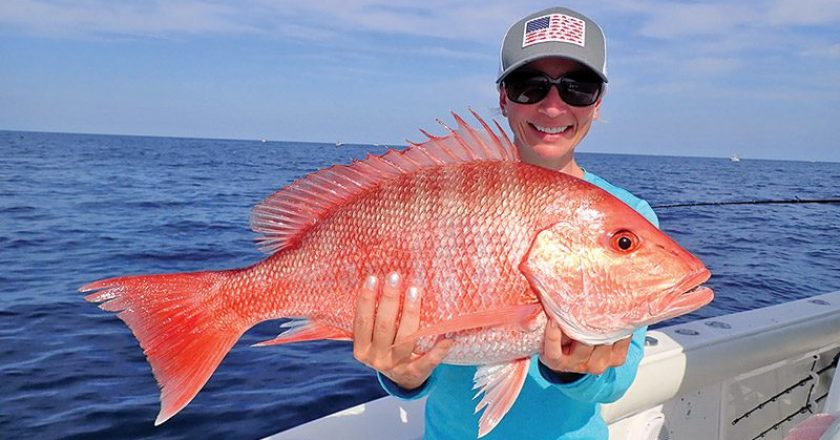 Fishing the reef out of Sebastian Inlet, Ally Toth landed this beauty on opening day of the 2021 Atlantic red snapper season by drifting dead pogies on the bottom.