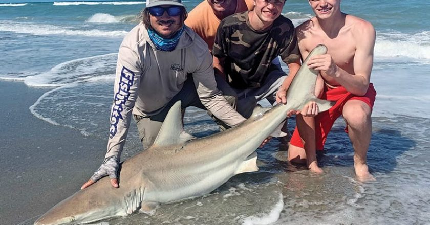 Exciting shoreline shark fishing will stay consistent throughout May.