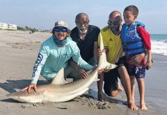 Shark remain a consistent surf fishing species for Space Coast anglers this June.