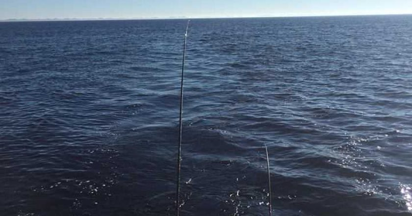 Grand haven fishing report archives coastal angler the for Grand haven fishing report