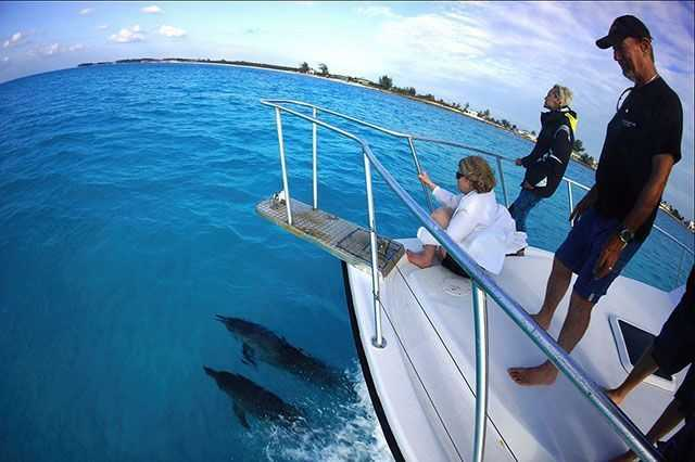 May marks the official full swing start of wild spotted dolphin season in Bimini. PHOTO CREDIT: Bimini SCUBA Center.