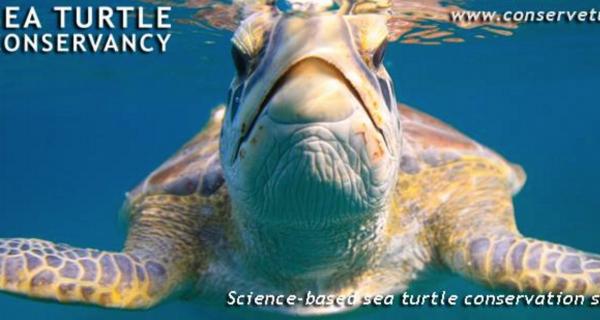 Coastal Angler Brevard Sea Turtle Conservancy