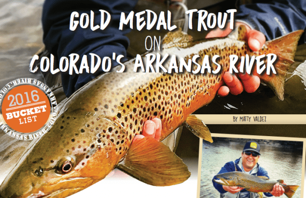 Gold Medal Trout On Colorado Arkansas River