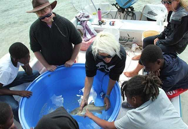 Students getting to touch a juvenile lemon shark. PHOTO CREDIT: Charlotte Sams.