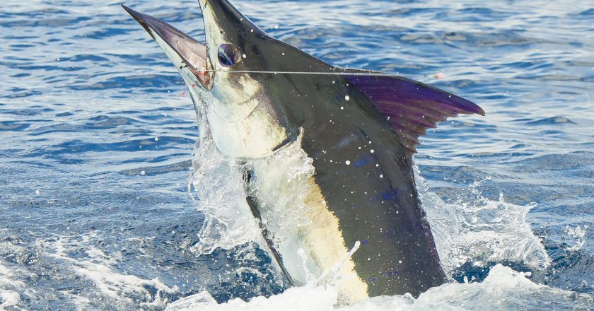 Herradura Costa Rica Fishing Forecast