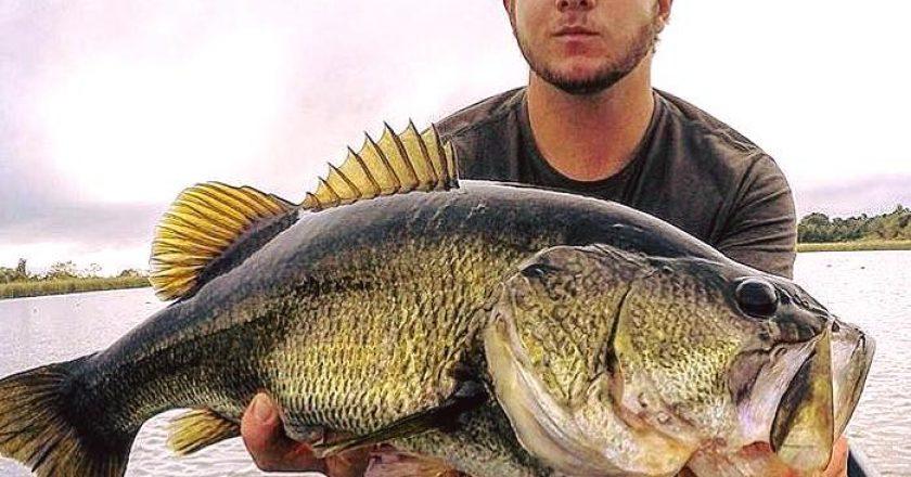Big O Bass