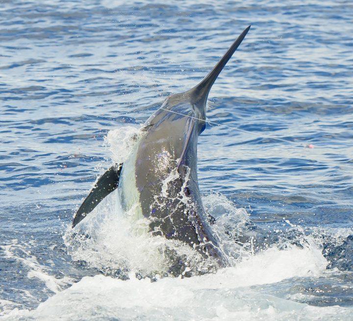 Costa Rica FAD Fishing