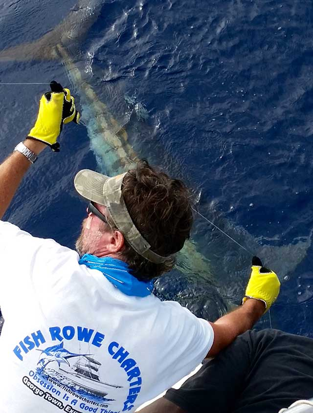 July is a great month for blue marlin in Exuma waters. PHOTO CREDIT: Fish Rowe Charters.