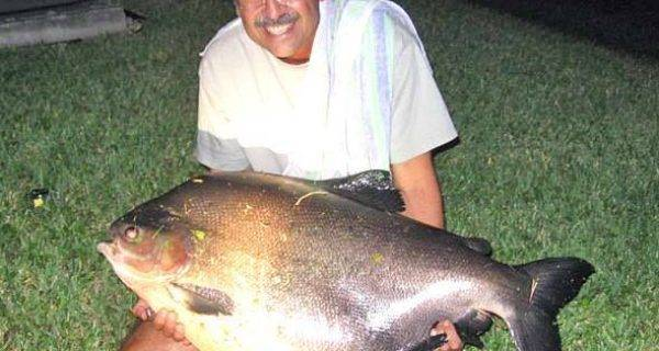 Species spotlight coastal angler the angler magazine for Fish native to florida