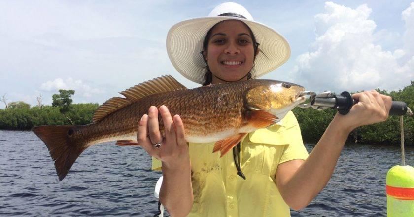 Isabel Carbo, Redfish