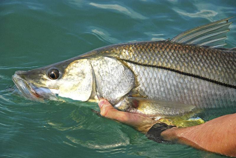 Fort myers fishing report sept 2016 coastal angler for Southeast florida fishing report