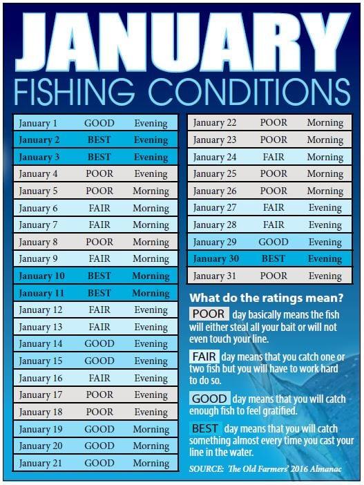bahamas fishing reports  forecasts  news articles