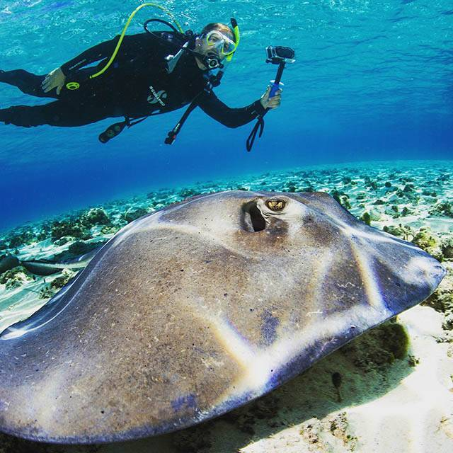 Visibility in September is 100-foot-plus most month, verging on infinite sometimes. Photo courtesy of Bimini Scuba Center.