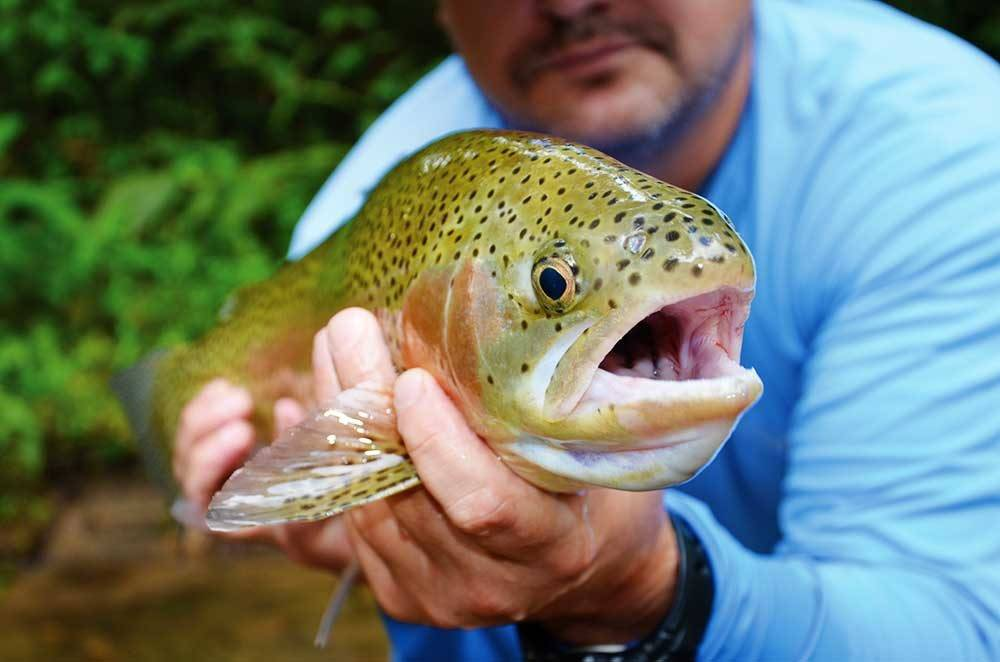 Cherokee n c fly fishing tournament oct 28 30 for Cherokee trout fishing